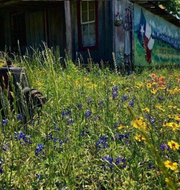 WILDFLOWER WATCH - Brenham, Texas & Washington County